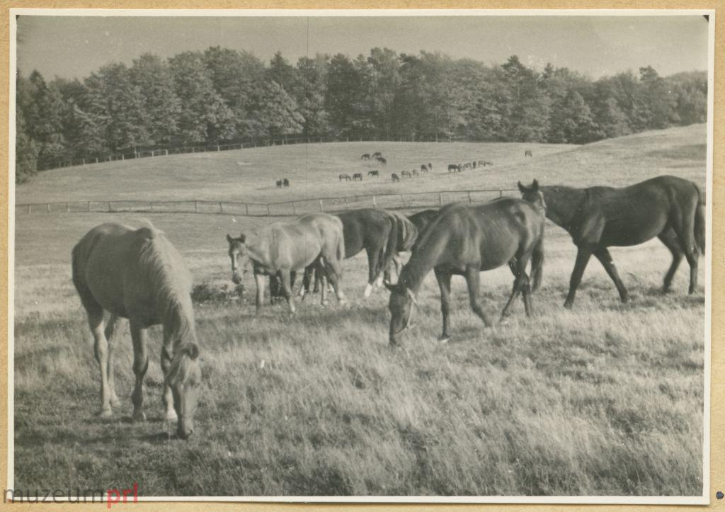 wizerunek  Hodowla koni