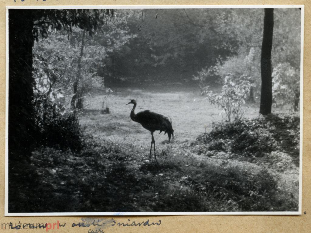 wizerunek  Żuraw w okolicy jeziora Śniardwy